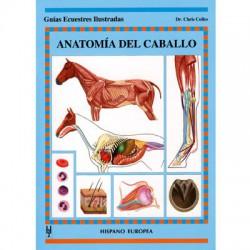 Guía Ecuestre: Anatomía del caballo